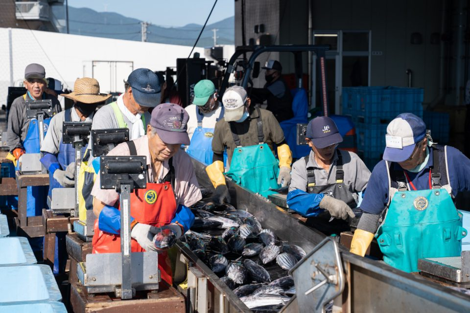 Kesennuma Fish Market